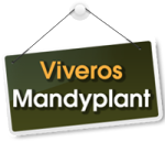 Mandyplant
